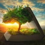 estudo-bíblico-árvore-da-vida-pregação-apocalipse
